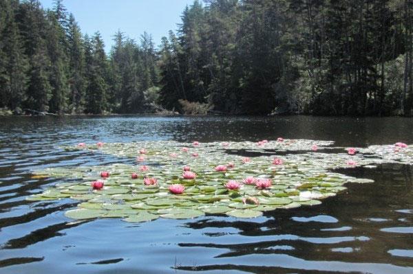 Florence Oregon Coast | Florence Oregon